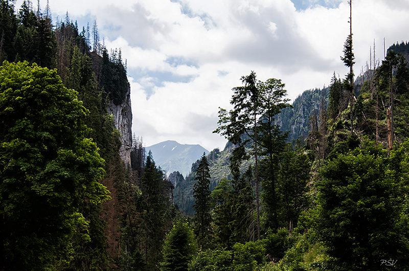 Косцелиская долина