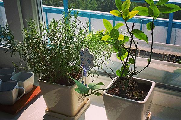 Растим специи в квартире