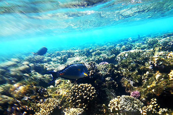 Виды рыб Красного моря