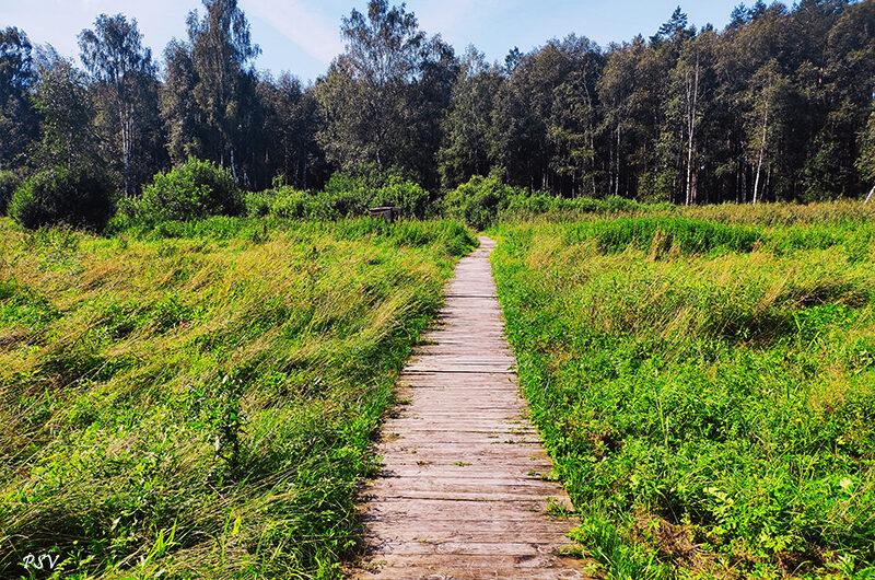Налибокская пуща — экологические тропы