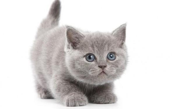 Решили завести котенка? 10 вещей, которые стоит купить заранее